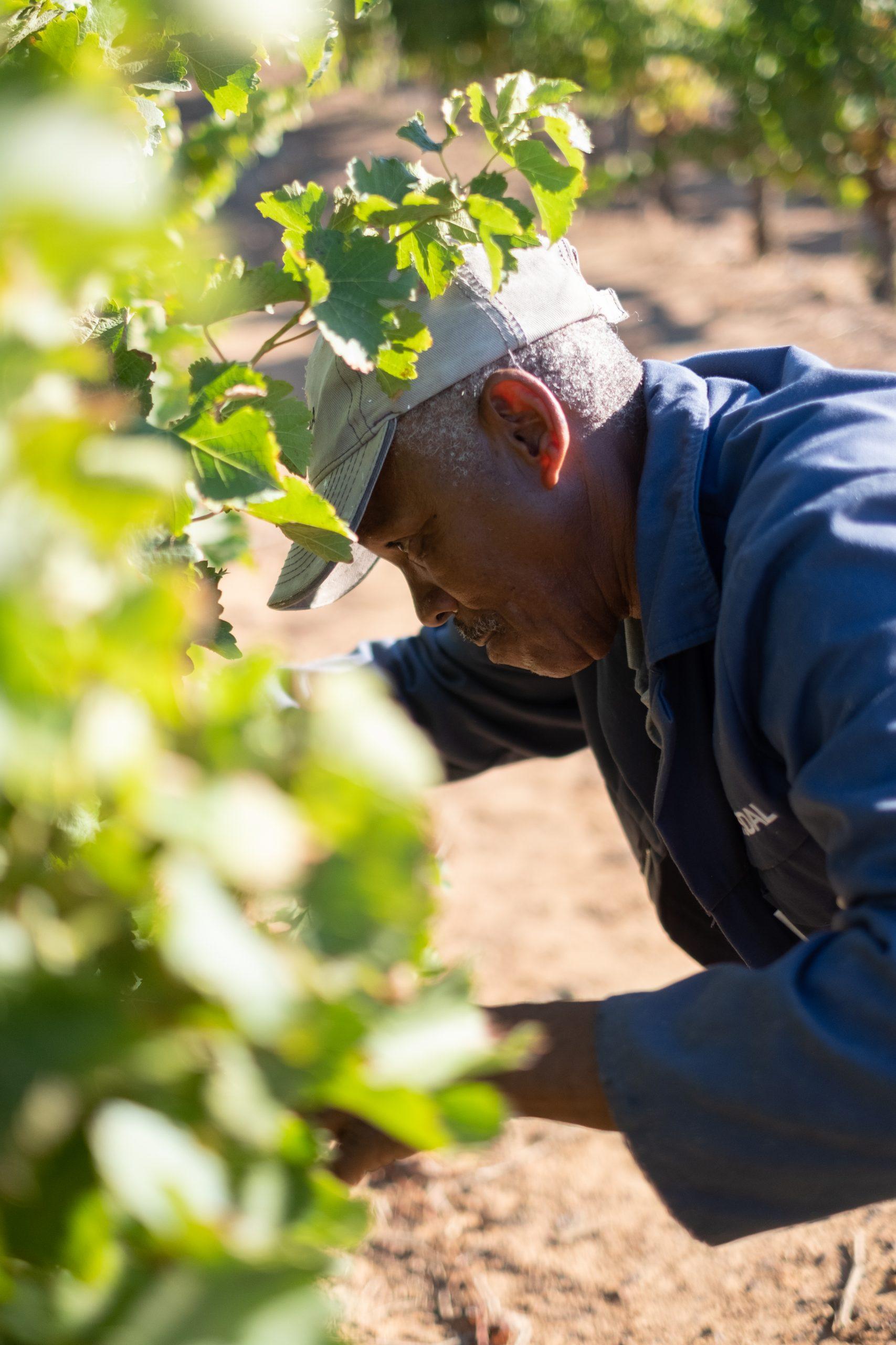 Diemersdal Hand Picked Sauvignon Blanc Feb 2019