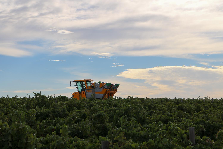 Diemersdal Farm Harvest January 2018