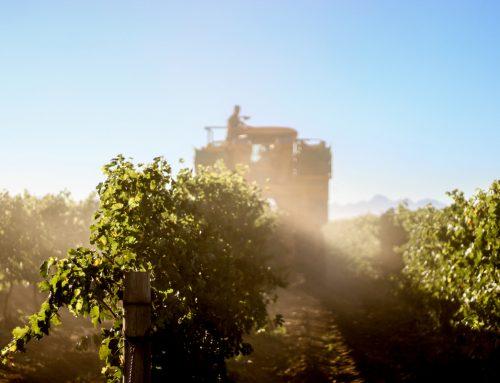 Diemersdal Harvest Report 2020