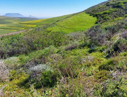 Diemersdal Wine Estate Becomes WWF Conservation Champion for Preserving Endangered Ecosystem